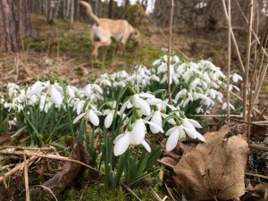 The beginnings of Spring