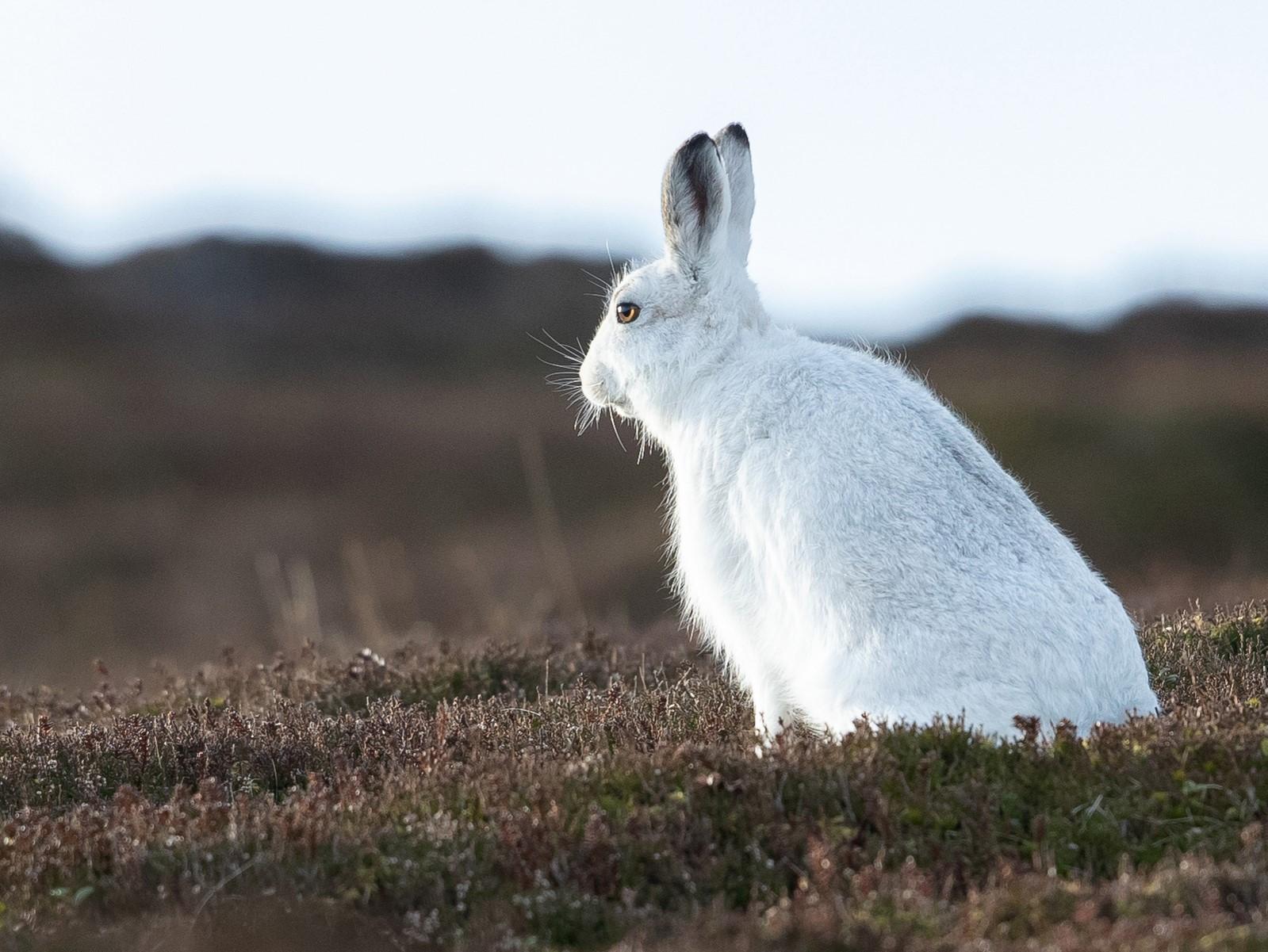 Wildlife in the Cairngorms